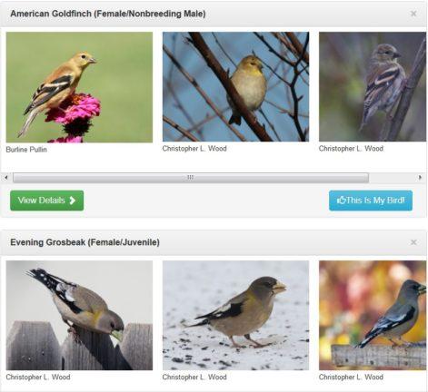 Merlin Bird Photo ID - Best Matches