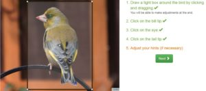 How to Identify a Bird from Pictures?