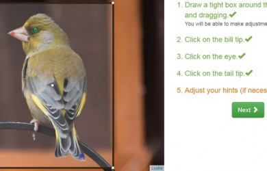 Merlin Bird Photo ID software on web browser